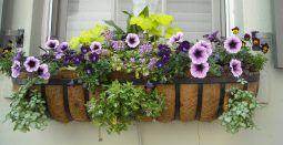 Plantas de Exterior